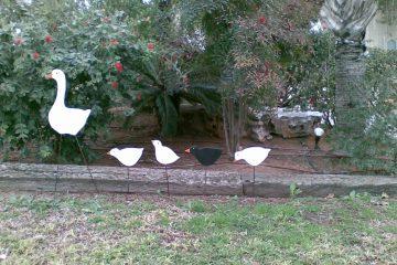 מ.ע 9 – אמא אווזה עם אפרוחים