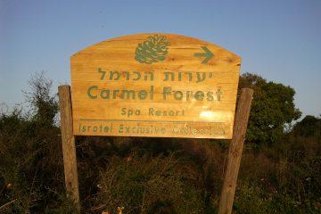 עסקים 4 – יערות הכרמל